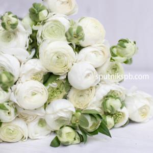 Ранункулюс белый | Ranunculus white