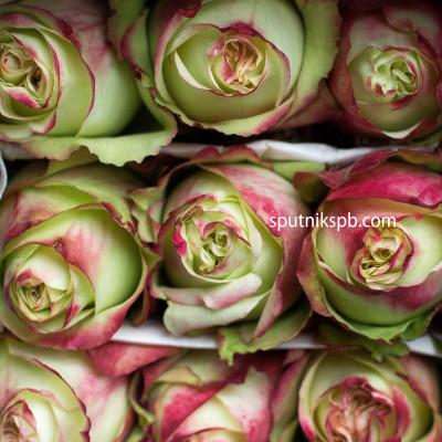 Роза Brocante