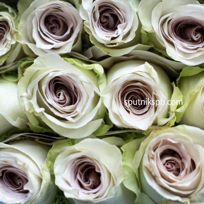 Роза Early Grey