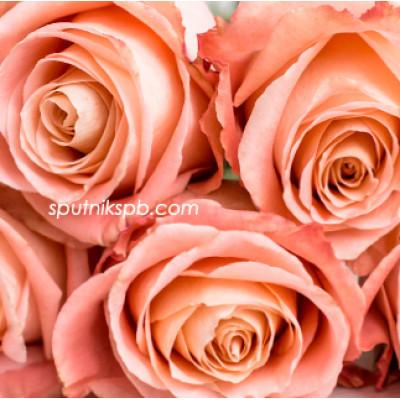 Роза Fado
