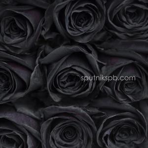Роза Gothic
