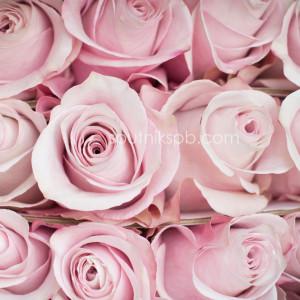 Роза Secret Garden