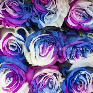 Оптовая цветочная база «Спутник»: купить розы Tinted Liberty оптом
