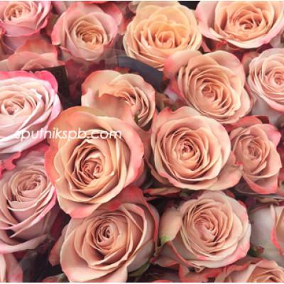 Роза Cappuccino