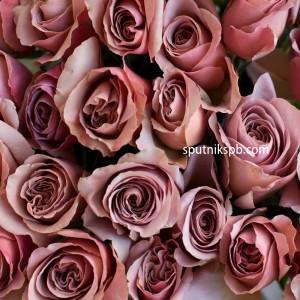 Роза Cappucino