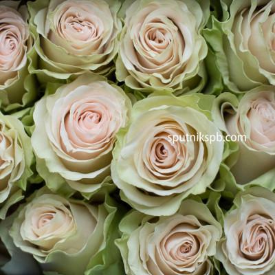 Роза Cava