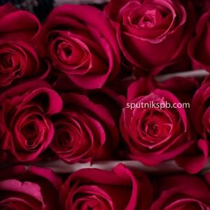 Роза Cherry O