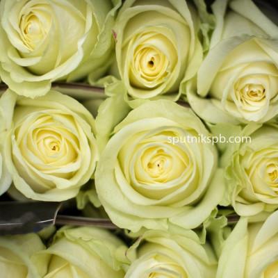 Роза Cream Unique