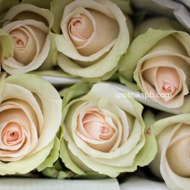 Роза La Perla
