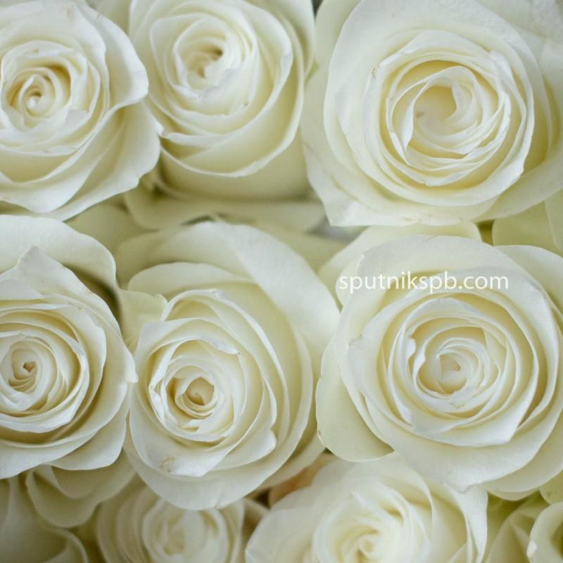 Белые розы купить в спб