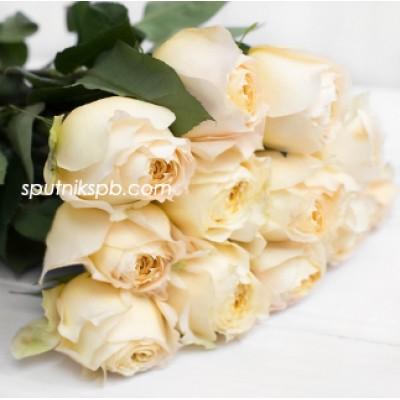 Пионовидная роза Caramel Antike