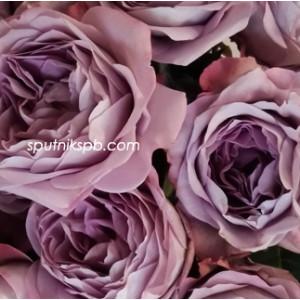 Роза пионовидная Лавендер Букет | Lavender Bouquet Rose