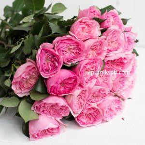 Роза пионовидная Мария Терезия | Mariatheresia Rose