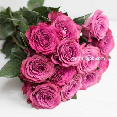 Роза Пионовидная Precious Moment