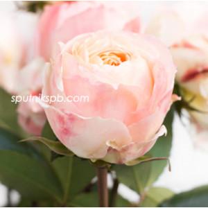 Роза пионовидная Принцесса Айко | Princess Aiko Rose