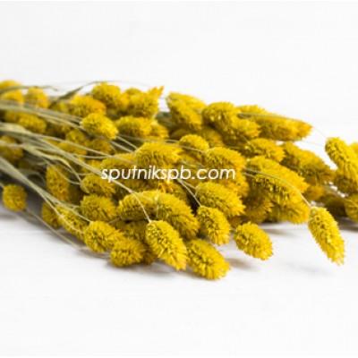 Фалярис желтый