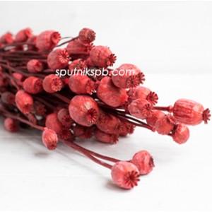 Папавер красный