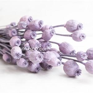 Папавер светло-фиолетовый