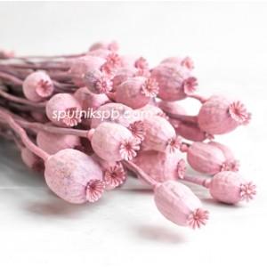 Папавер светло-розовый