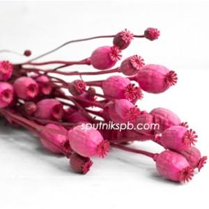 Папавер ярко-розовый