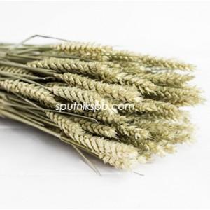Тритикум (пшеница) натуральный