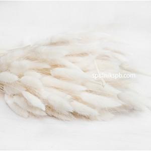 Лагурус белый