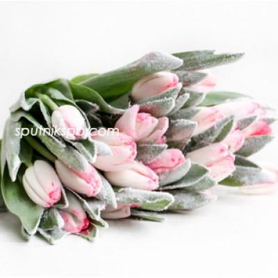 Оптовая цветочная база «Спутник»: купить тюльпаны Sugar Candy оптом