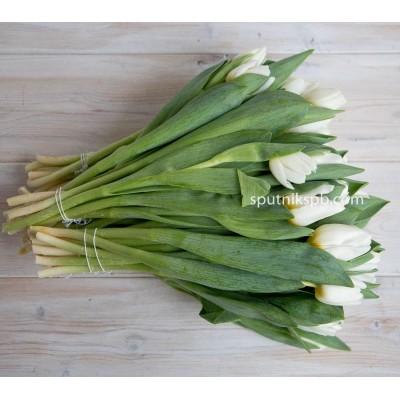 Оптовая цветочная база «Спутник»: купить тюльпаны Антарктика оптом
