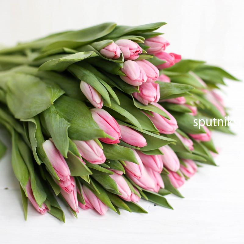 Оптовая цветочная база «Спутник»: купить тюльпаны Dynasty оптом
