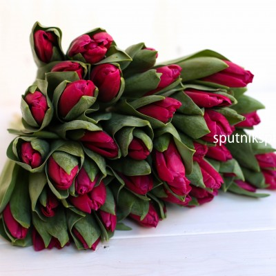 Тюльпан PINK ARDOUR оптом на сайте Спутник