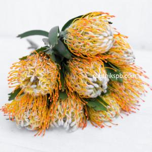 Протея Нутан оранжевая